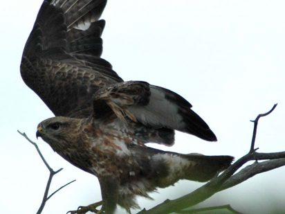 birding safari