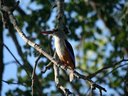 Zangarna Game Lodge - Birding Safari